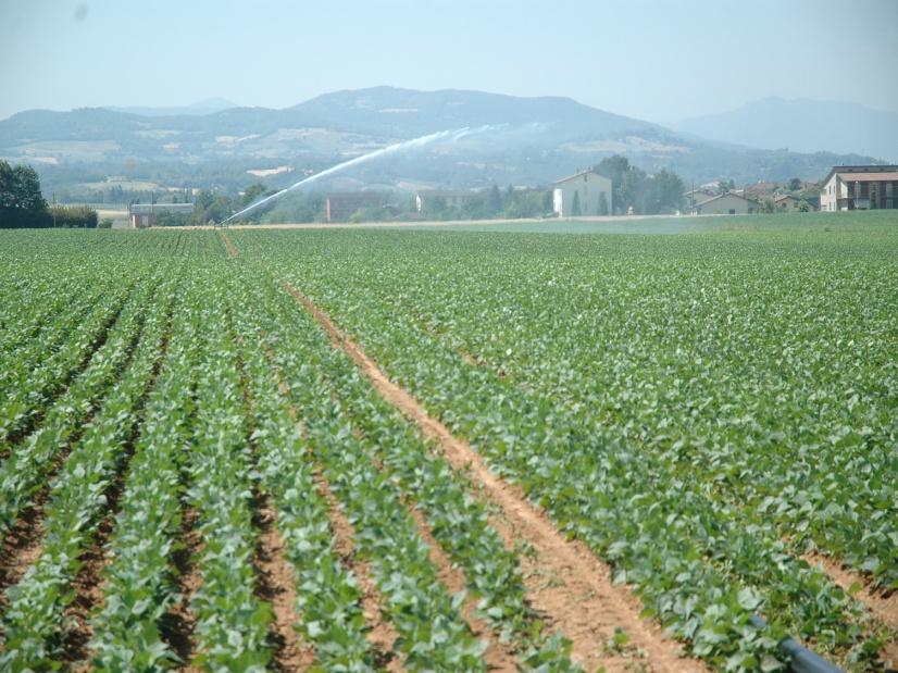 Photo of IMU anche su terreni agricoli montani e collinari