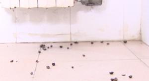 La sporcizia presente nello spogliatoio degli arbitri del 'Nuovo Antistadio' di Selva Piana