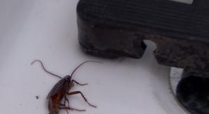 Uno scarafaggio morto nella doccia degli spogliatoi del 'Nuovo Antistadio'