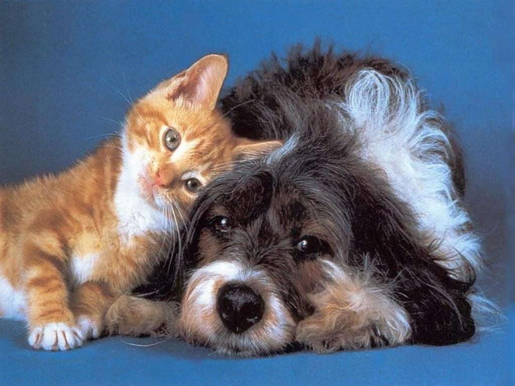 Photo of L'angolo del veterinario: le malattie cardiovascolari degli amici a quattro zampe. Prevenzione e cura
