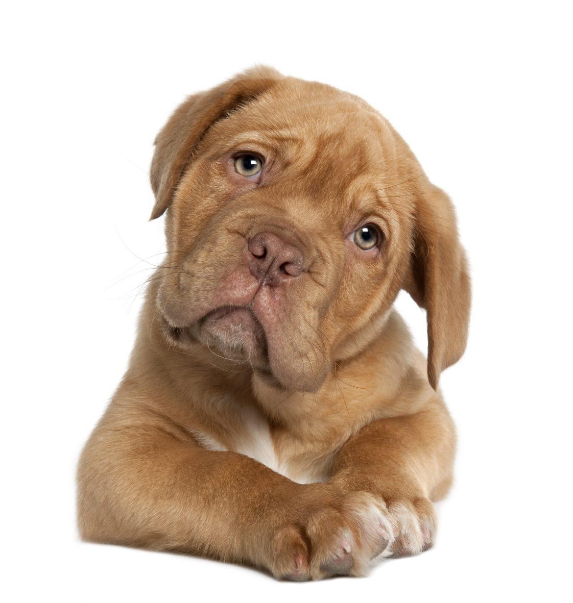Photo of L'angolo del veterinario: l'osteoartrosi è un problema comune negli animali d'affezione