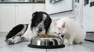 Photo of L'angolo del veterinario: prevenire le malattie degli amici a quattro zampe con una corretta alimentazione