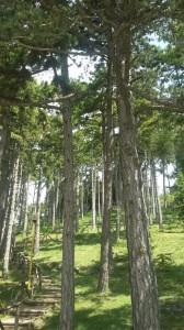 Il parco di San Giovannello