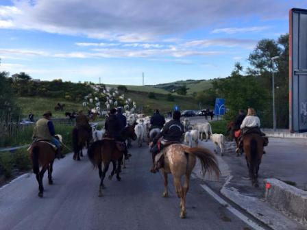"""Photo of """"Uno spazio a forma di cuore tra Abruzzo e Puglia"""". La guida turistica internazionale 'Lonely Planet' racconta i gioielli del Molise"""