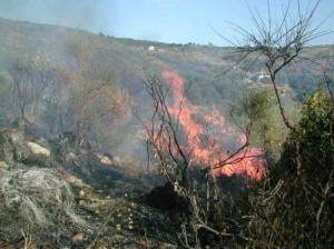 IncendioBoschivo