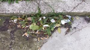 Un cumulo di cicche di sigarette vicino a un marciapiede