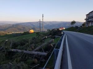 Alcuni degli alberi abbattuti all'ingresso di Pietracatella