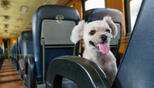treno-animali-cani