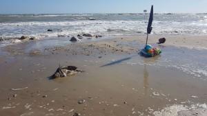 La tartaruga morta a Campomarino Lido