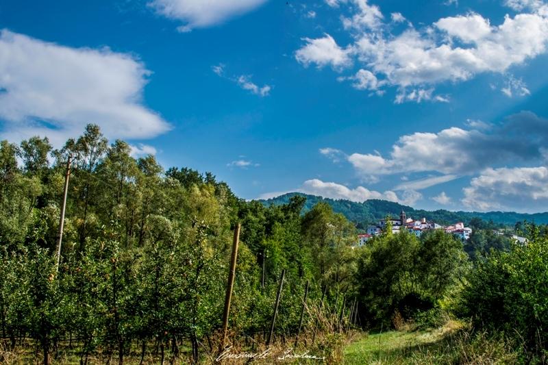 Il meleto di Castel del Giudice (foto Emanuele Scocchera)