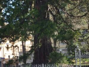 Sequoia-a-Campobasso