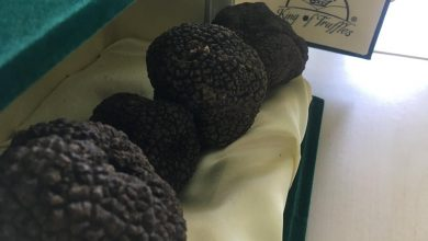 Photo of Il 're del tartufo' protagonista a Gaiole in Chianti: l'oro del Molise tra chef stellati e beneficenza