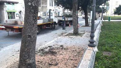 Photo of Messa a dimora di nuovi alberi in via Elena e lavori alla fibra ottica: a Campobasso è il giorno delle limitazioni alla mobilità