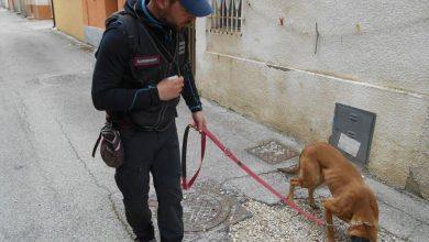 Photo of Esche avvelenate, a Petacciato a setaccio la località Morgetta. Trovate le carcasse di due cani e una volpe