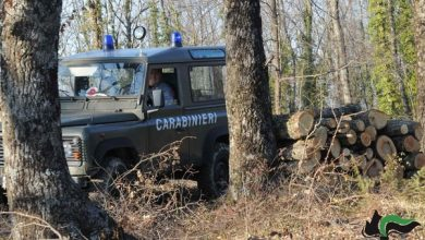Photo of Taglialegna senza contratto, titolare e operaio della ditta nella rete dei Carabinieri Forestali