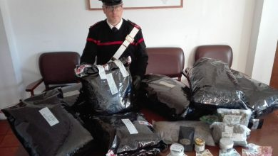 Photo of A casa con 21 Kg di marijuana: in manette studente di Campomarino