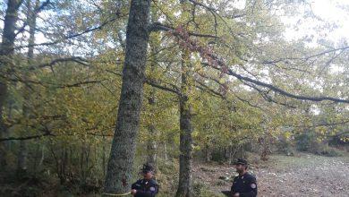 Photo of Chiauci, tagli boschivi non conformi alle norme: i Carabinieri multano 3 persone