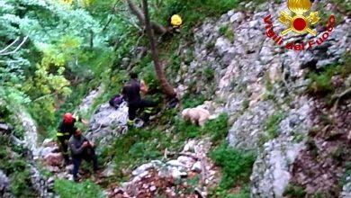 Photo of San Polo Matese, cane cade in una forra ma viene salvato dai Vigili del Fuoco