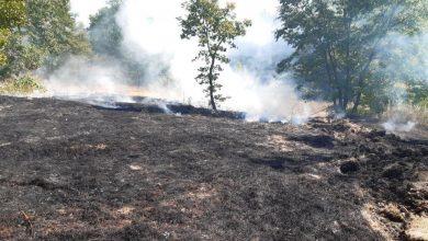 Photo of Incendio boschivo colposo, a Cercemaggiore denunciato un uomo