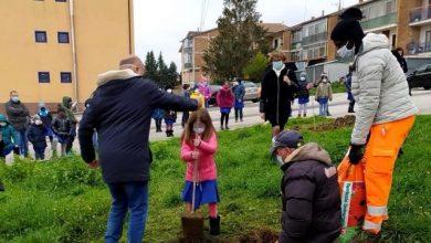 Photo of Campobasso, dopo il maltempo celebrata in città la Giornata nazionale degli alberi