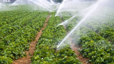 acqua agricola